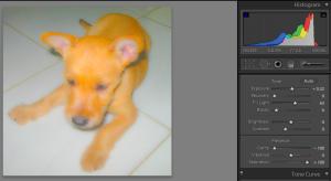 Edit Setting