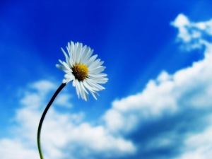 Bunga dan Langit Biru (Foto Awal)