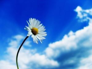 Bunga dan Langit Biru (Hasil Edit)